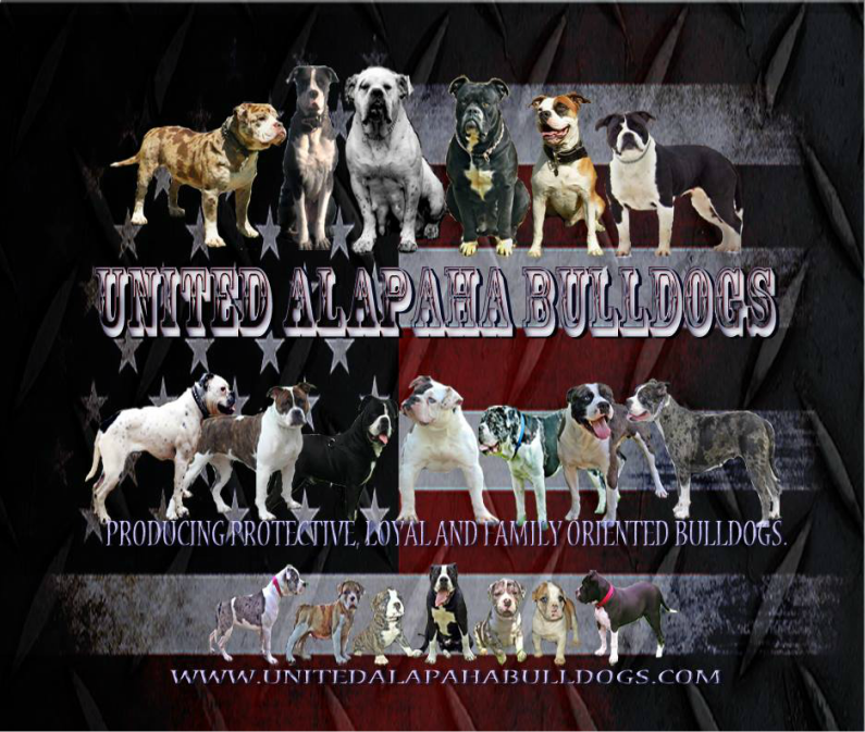 UNITED ALAPAHA BULLDOGS
